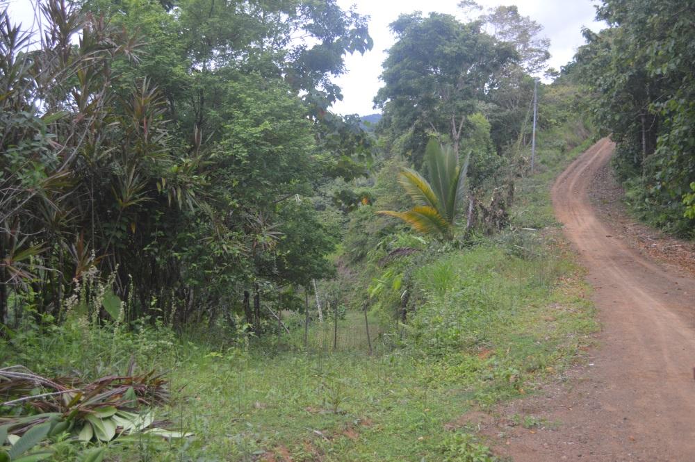 Lot in Pavones hills