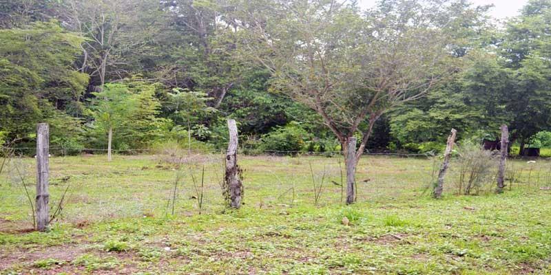 La Hierba Land For Sale in Pavones