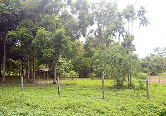 La Hieba Land for sale