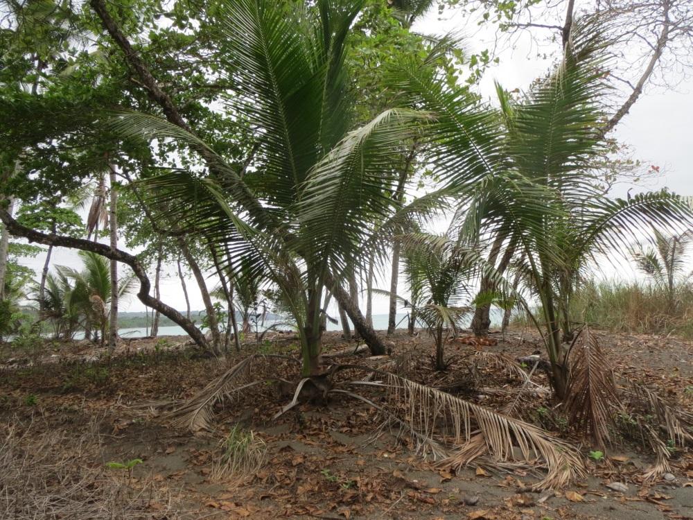 Playa pilon real estate